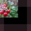 Tyttebærsyltetøy